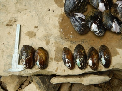 DSCN7639-mussels-sm
